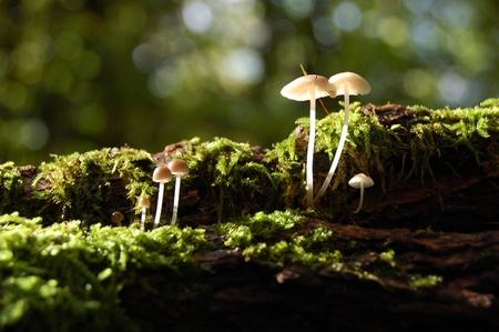 Little Mushrooms on mossy tree trunk  photo