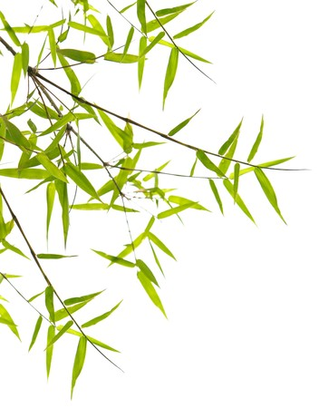 Japanese bamboo leaves on thin twigs isolated on white