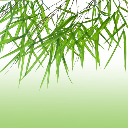 Backlit stems of beautiful green bamboo leaves with green gradient for text Banque d'images