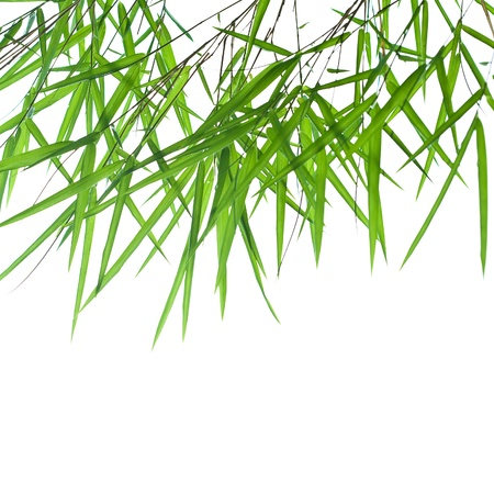 Backlit stems of beautiful green bamboo leaves with space for text photo
