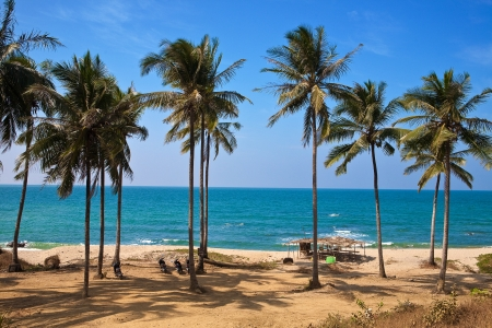 Line of cococut trees along a sandy beach against blue skies in Myanmar west coast.