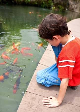children pond: Young boy feeding Japanese koi fish in tropical pond Stock Photo
