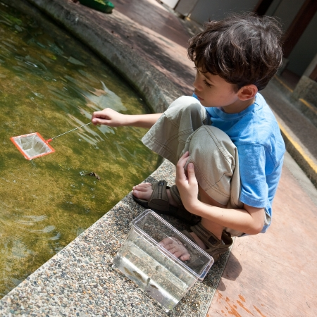 children pond: Young boy enjoying an activity of catching small fish in pond with net. Stock Photo