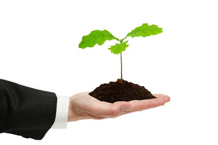 Small sprout of oak in the hand of businessman isolated on the white background. photo