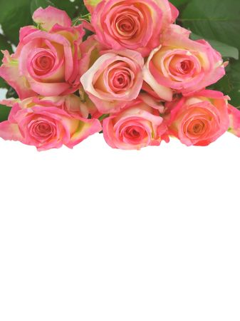allocated: Bunch of roses on the white  background with a space allocated for a text. Stock Photo