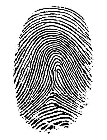 dedos: Formato vectorial de huella dactilar. Vectores