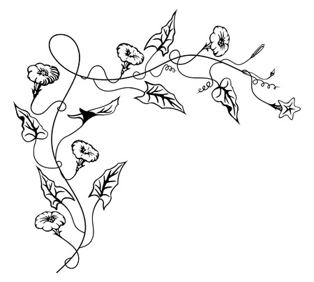 Bindweed flowers ornament-vector illustration.