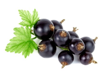 black currants: Close-up of fresh black currant on white background.