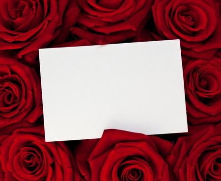 rosas rojas:  Una tarjeta en blanco para felicitaciones en el fondo de rosas.