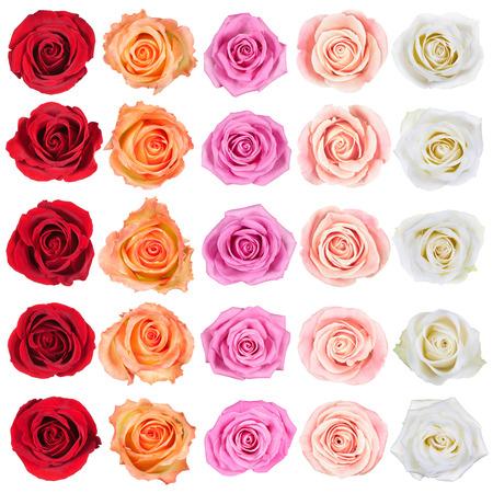 rosas amarillas: Colecci�n de hermosas rosas, aislado en el fondo blanco Foto de archivo