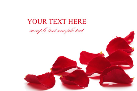rose petals: Rose petals, isolated on the white background, clipping path included  Stock Photo