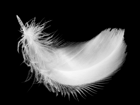 Closeup of white feather, isolated on the black background