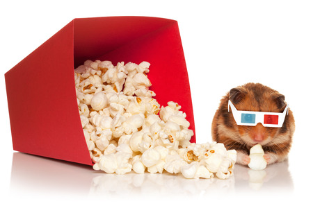 Hamster in 3d glasses chewing popcorn next to the red bucket, isolated on the white background. photo
