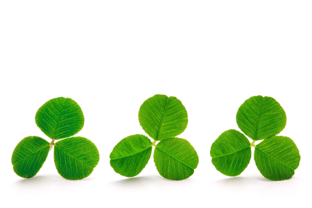 Green clover leaves isolated on the white background. Archivio Fotografico