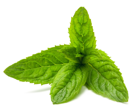 Fresh peppermint leaves isolated on the white background,