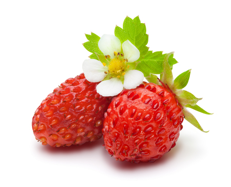Wild strawberries with green leaves and flower, isolated on the white background, clipping path included. Archivio Fotografico