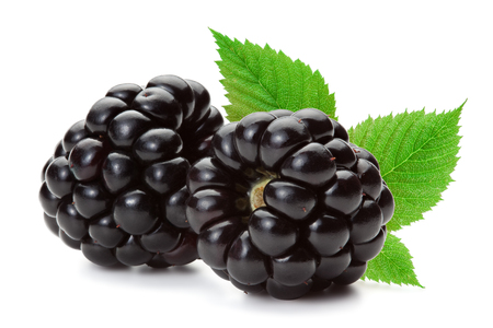 Closeup of ripe blackberries with leaves isolated on the white background, clipping path included. Archivio Fotografico