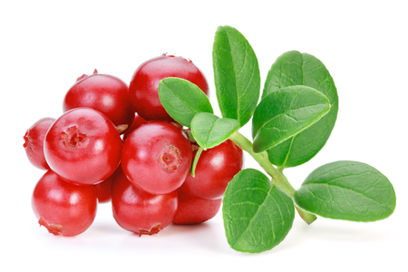 Closeup of red lingonberries (cowberries, foxberries) with leaves, isolated on the white background, clipping path included. Archivio Fotografico