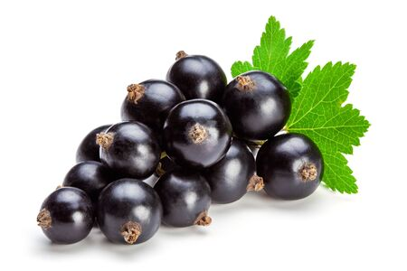 Black currant berries with leaf isolated on the white background