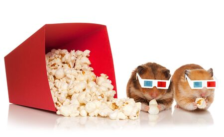 Two hamsters in 3d glasses, chewing popcorn, watching film, isolated on the white background.