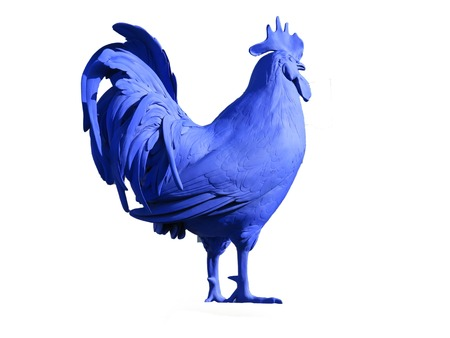 dominant: A brightly blue colored cockerel on a white background