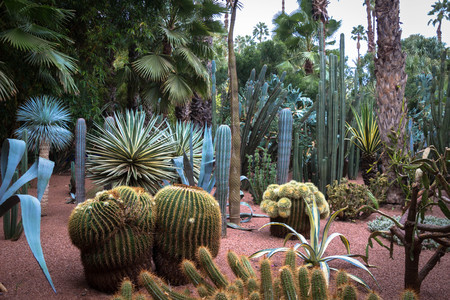 Botanical garden Jardin Majorelle in Marrakesh
