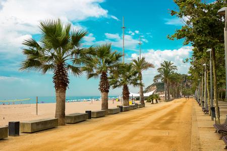 the furlough: Palm trees on beach promenade in Calella on Costa Brava Spain. Stock Photo