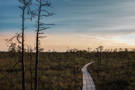 Swamp at sunset with dark clouds in Latvia.