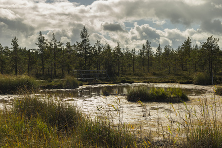 Walking trail in a swamp of Kemeri National Park, Latvia Stock Photo