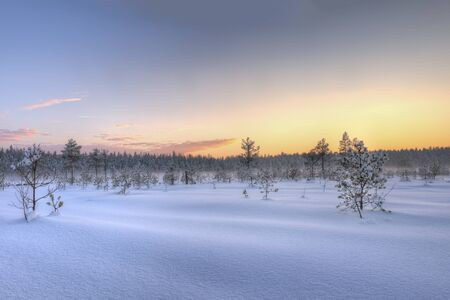 Frosty morning in raised bog. Landscape with the frozen plants. Latvia. Stok Fotoğraf - 131855928