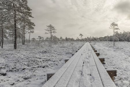 Frosty morning in raised bog. Landscape with the frozen plants. Latvia. Stok Fotoğraf