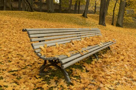 Colorful leafage with grundge bench in the park