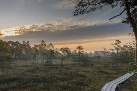 Sunrise at foggy swamp with small dead trees covered in early morning. Kemeri national park at sunrise, Latvia.