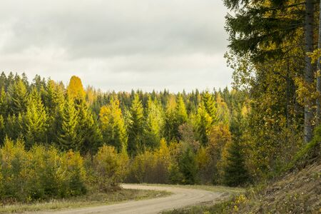 A curving autumn road. Autumn landscape with fallen dry yelow leaves, road through the forest and yellow trees Archivio Fotografico