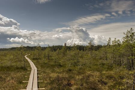 Wooden boardwalk through beautiful forest and swamp. Estonia
