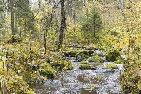 Flowing stream in forest in autumn, long exposure Archivio Fotografico - 137414346
