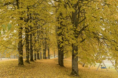 Beautiful romantic alley in a park with colorful trees, autumn Archivio Fotografico - 137783370