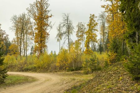 A curving autumn road. Autumn landscape with fallen dry yelow leaves, road through the forest and yellow trees Archivio Fotografico - 138065695