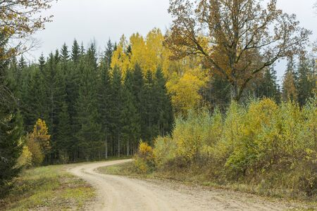 A curving autumn road. Autumn landscape with fallen dry yelow leaves. Banque d'images