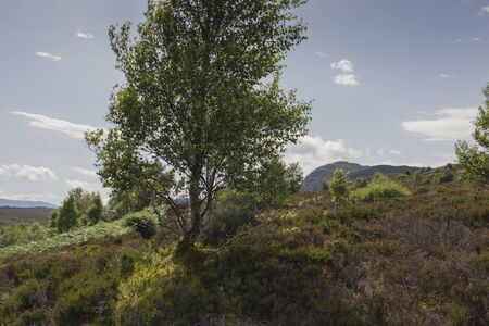 Panoramic view of Loch Ness from Meall Fuar-mhonaidh Banque d'images