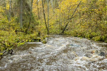 Flowing stream in forest in autumn, long exposure Archivio Fotografico