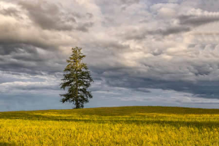 Scenic view of single lonely tree in green wheat field on partial cloudy stormy weather spring day. Minimalist simple trendy landscape.