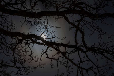 Night mysterious landscape silhouettes of the bare tree branches against the full moon and dramatic cloudy night sky