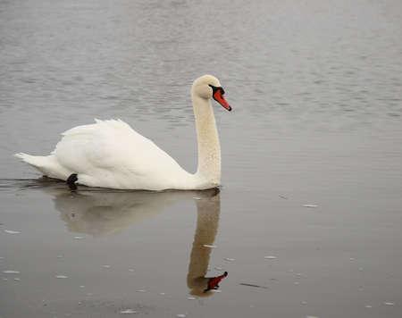 natation: Nadar en el crudo.