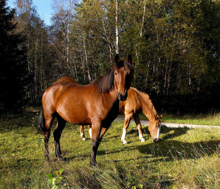 horseflesh: Horseflesh.