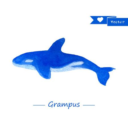 grampus: Blue grampus illustration. Handdrawn watercolor whale Illustration