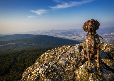 dog hound