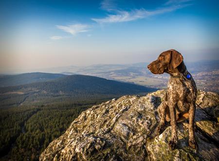 dog rock: on a rock hound dog
