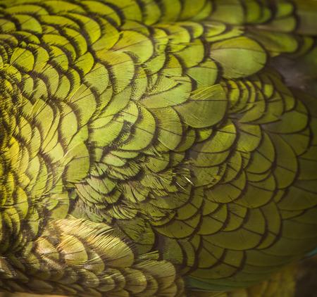 green feathers Banco de Imagens