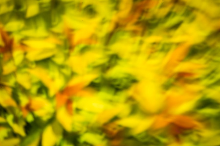 abstract yellow green color photo